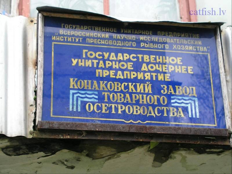 Конаковский завод по осетроводству