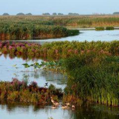 Раскаты – место нереста многих видов рыб и птичьих гнездовий